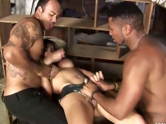 Rough Copulation Tranny Banged
